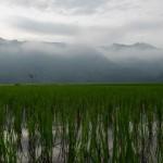 01 Kars Gombong Selatan_2013_Deni Sugandi