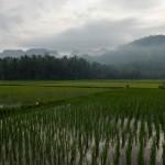 03 Kars Gombong Selatan_2013_Deni Sugandi