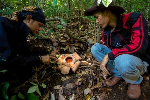 IMG_5257 Rafflesia Patma ©2014 Deni Sugandi